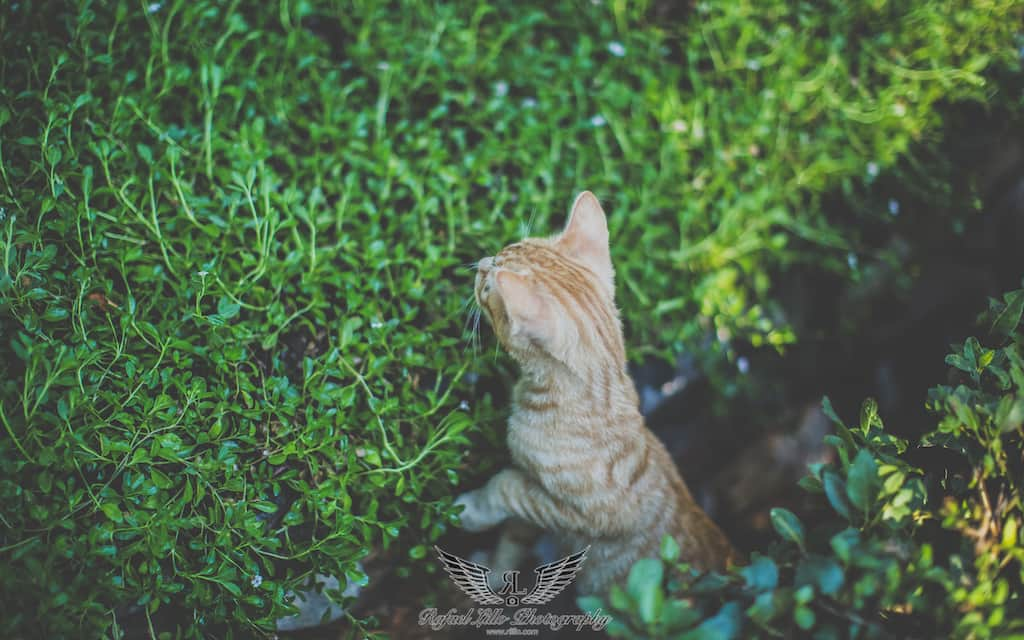 Rafael Lillo Fotografía -alhambra-123