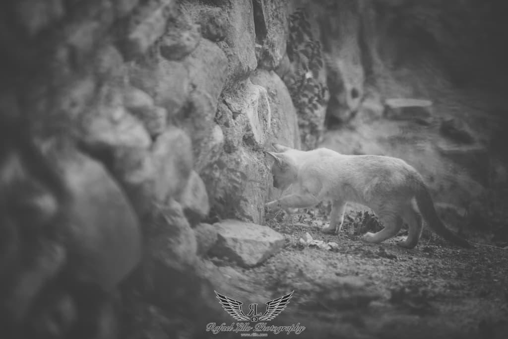 Rafael Lillo Fotografía -alhambra-30